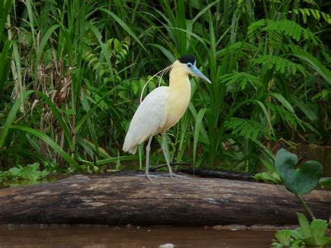 Birds Live On by Birding In Peru Aqua Expeditions