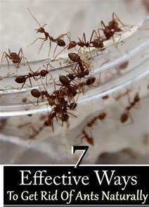 7 effective ways to get rid of ants naturally