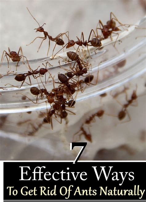 how do you get rid of ants in the house how do you get rid of ants 28 images how to get rid of ants ways to get rid of