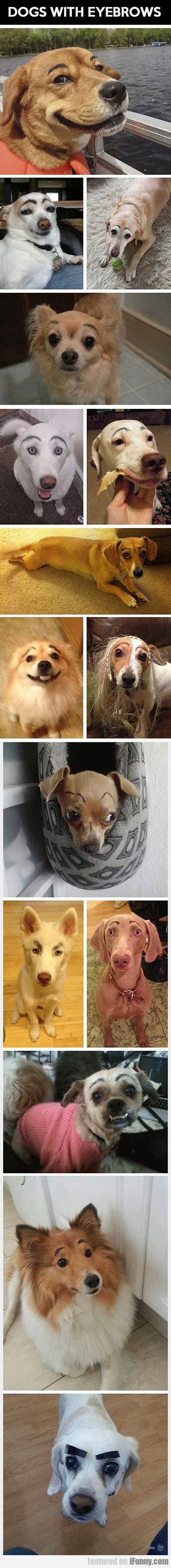 dogs with eyebrows dogs with eyebrows ifunny