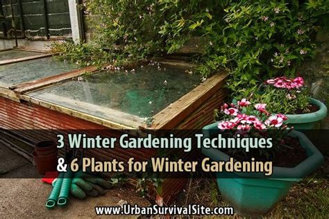 winter gardening 3 winter gardening techniques and 6 plants for winter