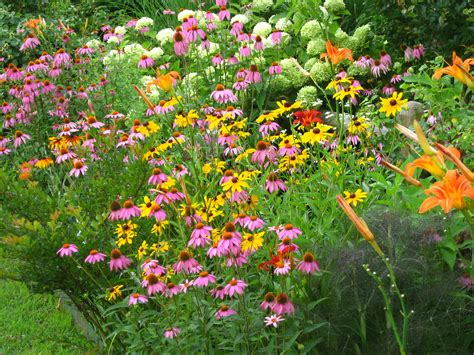 Garden Bushes With Flowers Butterflies And Hummingbirds In Your Garden Surf N Magazine