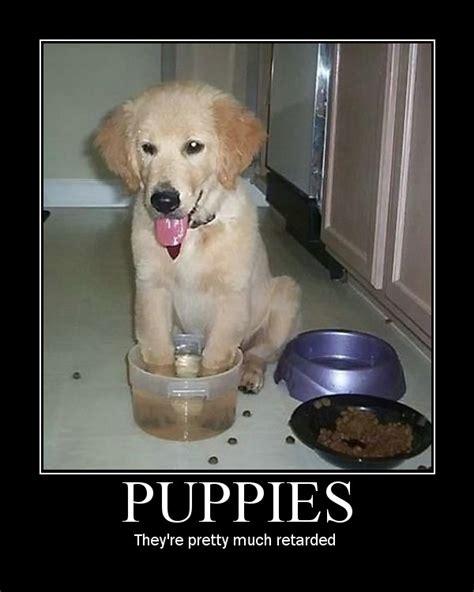 retarded puppy puppy image macros