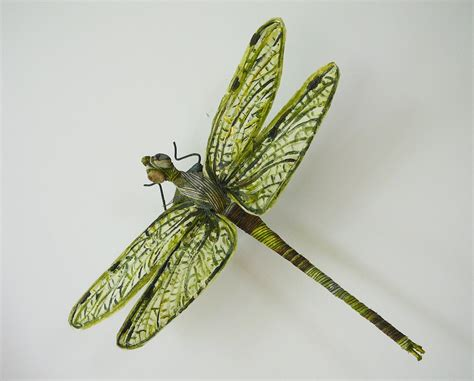 images of dragonflies amazing dragonfly insect dragonfly facts images