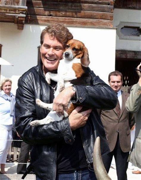 david hasselhoff puppies david hasselhoff ans his pets of