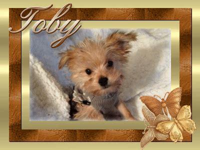 pats precious puppies testimonials