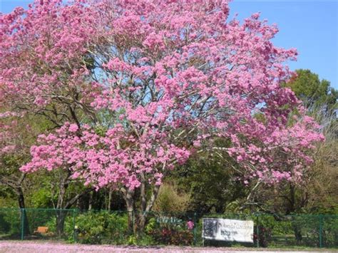 The Top 20 Most Beautiful College Gardens And Arboretums Of South Florida Botanical Gardens