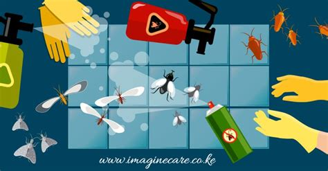 how to prevent bed bugs from spreading how to prevent bed bugs imagine care bed bug control
