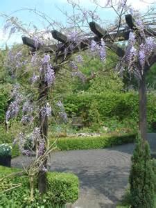How To Build An Arbor Trellis File Wisteria Sinensis An Pergola Jpg Wikimedia Commons