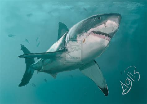 shark painting great white shark digital painting by aglisraushan on