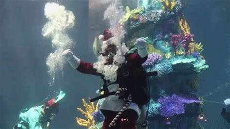 aquarium decoration  smooth  materials
