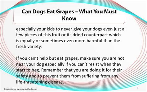can you give dogs grapes can dogs eat grapes what you must