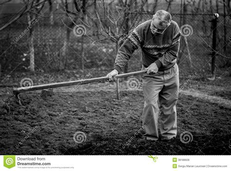 old black land young male farmer in the field royalty free stock photos