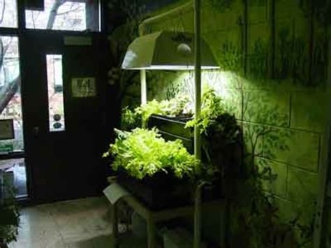 artificial light building an indoor garden 326 - Building An Indoor Garden