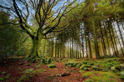 por una gentil floresta los bosques m 225 s bellos del mundo ciencia y educaci 243 n