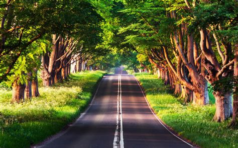 summer road trees  hd wallpapers