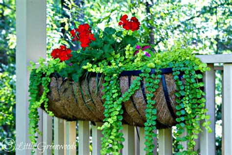 best small hanging plants the best plants for hanging baskets on front porches