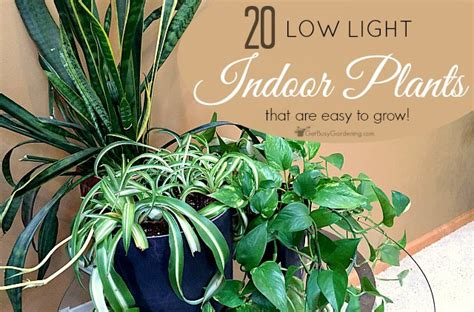 best plant for indoor low light low light indoor plant list 20 houseplants that are easy