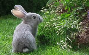 Backyard Animals Rabbit Hd Wallpapers