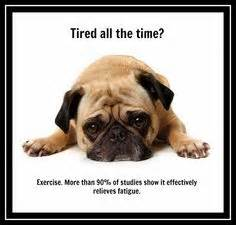 pug exercise 1000 images about sleep and exercise on sleep for and sleep