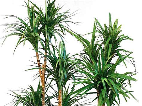 vendita online piante vendita online piante fiorista vendita piante on line