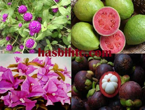 Aneka Tanaman Obat Dan Khasiatnya mengenal aneka tumbuhan herbal dan khasiatnya hasbi htc