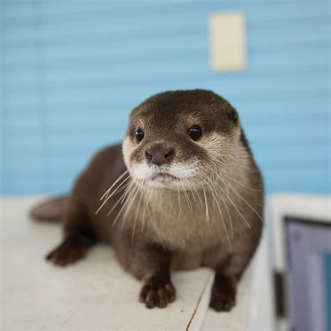 wee otter cute wild animals cute animals otters cute