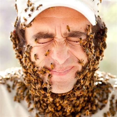 how to get rid of bees in house siding how to get rid of bees