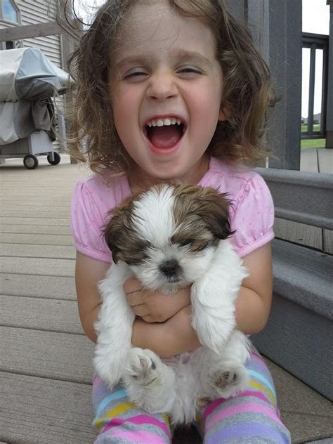 shih tzu with children 10 reasons every kid needs a shih tzu shih tzu daily