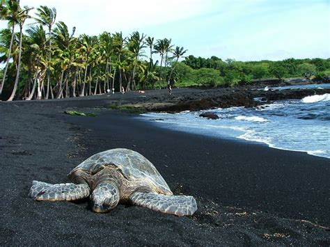 black sand beaches hawaii 17 of the most unusual beaches around the world bored panda