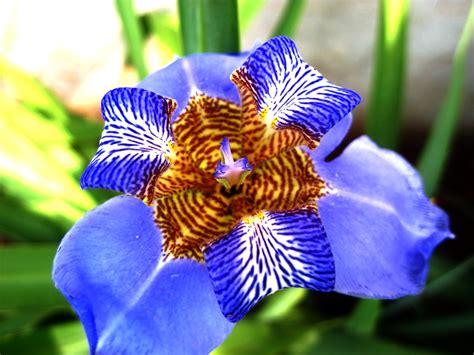 imagenes de flores iris 301 moved permanently