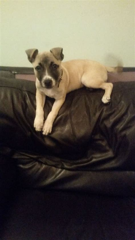 14 week puppy 14 week puppy pontefract west pets4homes