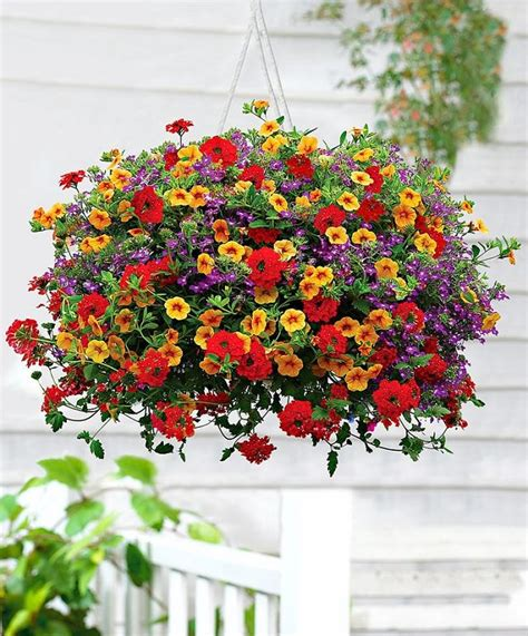 Best Plants For Hanging Planters by Best Plants For Hanging Baskets Balcony Garden Web