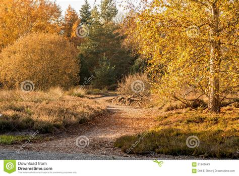 birch tree stock photo image 61843643