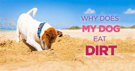 why does my eat dirt teddy hugo walker author at nuzzle your gps pet tracker