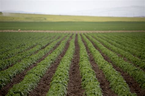 Colorado Warrants Search Directory Search Warrants For Pcn Ordered On Idaho Farms Potato Grower Magazine