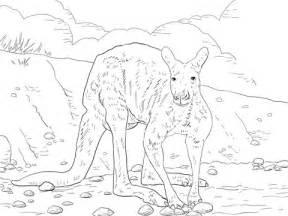 red kangaroo coloring page red kangaroo coloring pages coloring pages