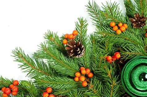 images christmas new year tree branches pine cone holidays