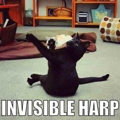 Harp Meme - invisible harp or kung fu kitty funny cat meme lol musical funnies pinterest kung fu