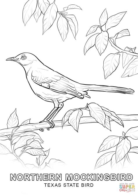 texas state bird coloring page free printable coloring pages