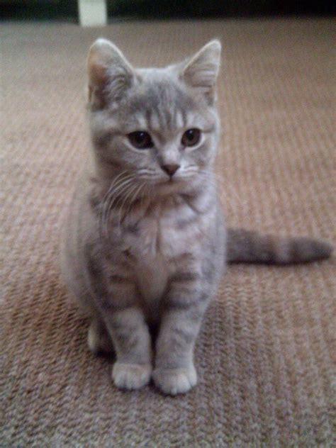 WANTED! Indoor cat mid December   Northampton