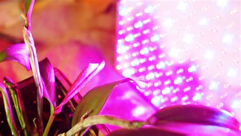 uv grow lights for growing plants stock footage