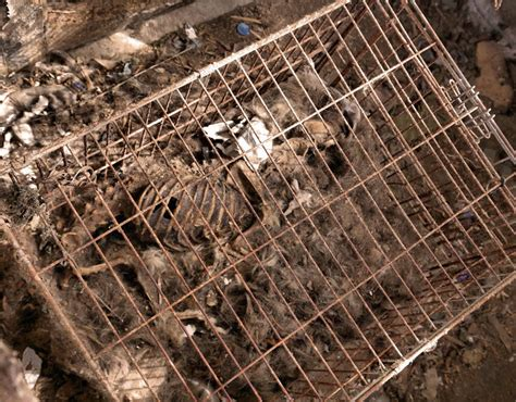 dead puppy inside a cage with the complete skeleton of a dead still inside abandoned house of