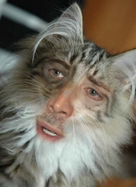 single serving site nic cage catssmital