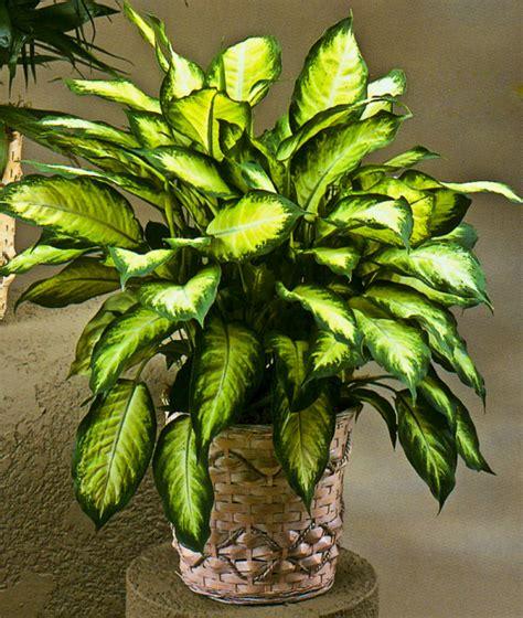plantas de interior sin luz 19 plantas de interior sin mantenimiento