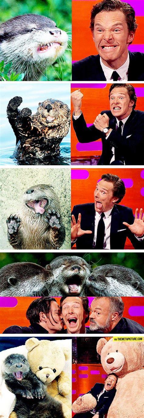 Benedict Cumberbatch Otter Meme - best 20 benedict cumberbatch ideas on pinterest