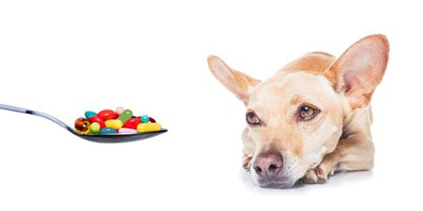 can dogs smell pills how to get your to take pills top tips