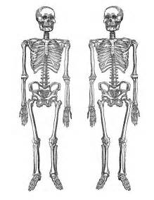 skeleton template to cut out printable decor clip on skeletons the graphics