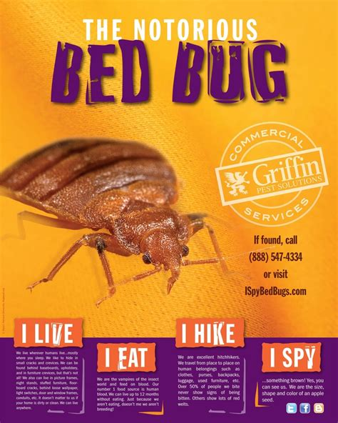 bed bugs solutions bed bugs are nasty our poster has some great info on what