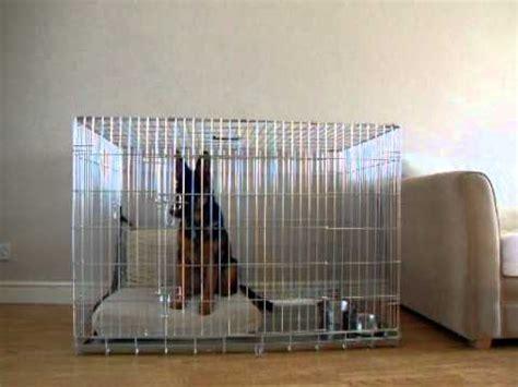 crate german shepherd puppy yoko german shepherd crate cage owczarek niemiecki klatka cwiczenie